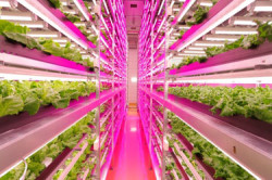 LED野菜工場