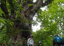 栃の巨樹とwさん