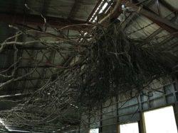小豆島の木